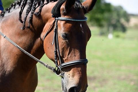 pferdesport/08.09.2018--vereinsturnier/13.jpg