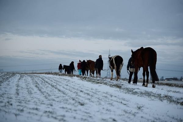 pferdesport/29.01.2019-winterfreuden/reiten-01.2019_00098.jpg