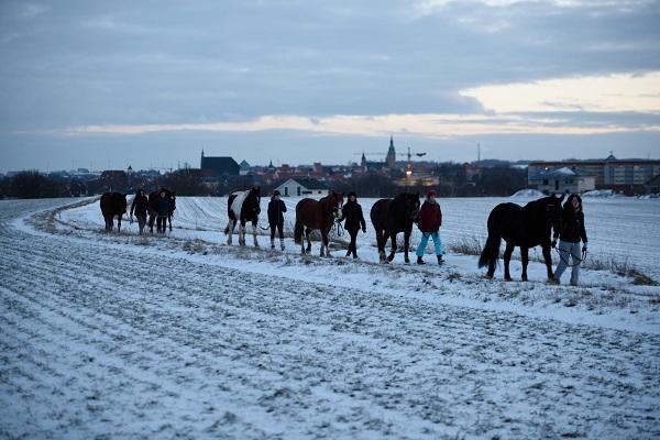 pferdesport/29.01.2019-winterfreuden/reiten-01.2019_00101.jpg